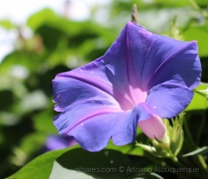 Macro/Uma bela flor...