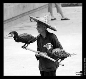 /Pescador Chinês