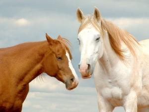 Animais/Cavalos