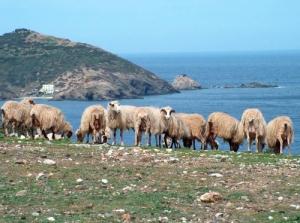 Paisagem Natural/a ver o mar...