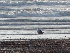 Outros/na praia à beira mar
