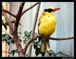 /Yellow Nature