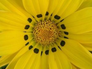 Outros/amarela