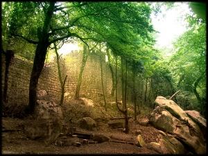 Paisagem Natural/O último Reino #2