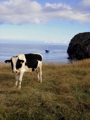 Animais/Açores