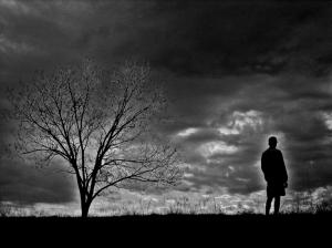 /Eu e a árvore IV...