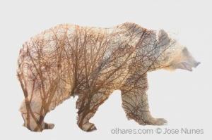 /Urso camuflado