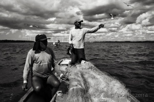 Fotojornalismo/Pavão das gaivotas...