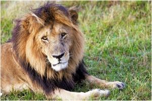 Outros/Papa Lion