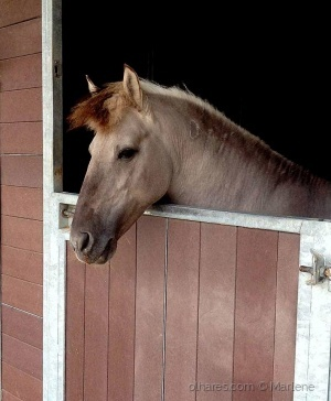 /Sou cavalo ou cavaleiro?