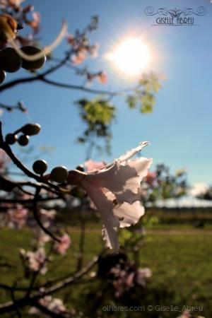 /Flor e sol
