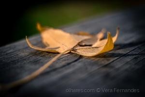 /Outono