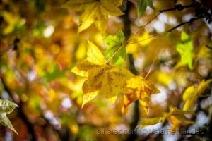 /Outono II