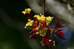 /Flores de acer