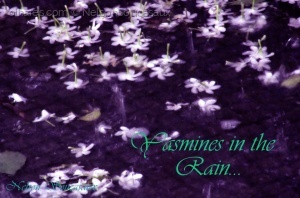 /Yasmines in the Rain