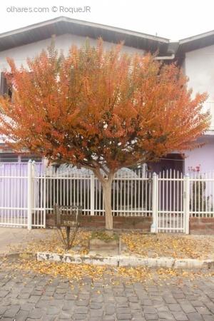 Paisagem Urbana/Árvore em frente 4