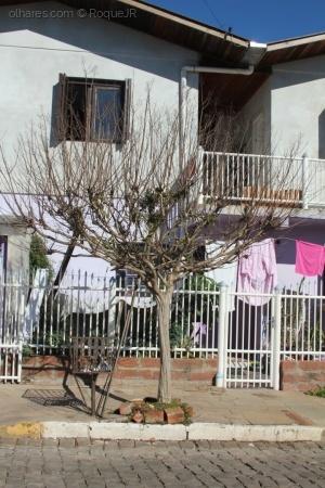 Paisagem Urbana/Árvore em frente 5