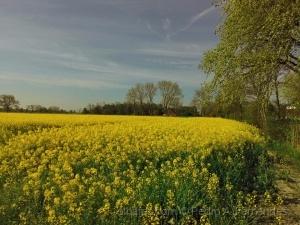 Paisagem Natural/Dia de primavera