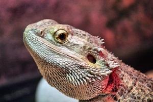 /um simpático dragão
