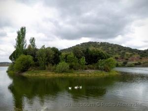 /Uma ilha rodeada de patos