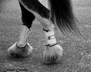 /A elegância começa pelos pés .