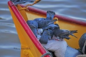 /Palomas en el barco