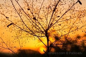 /Golden hour!