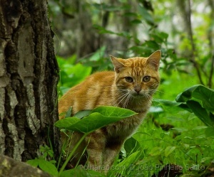 /Outro Gato Vadio....