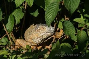 Animais/Disfarçado na vegetação