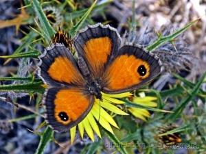 / A asa de uma borboleta...
