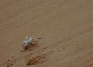 /Um cão brincava na areia....