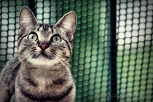 /Júnior, o gato mais lindo!