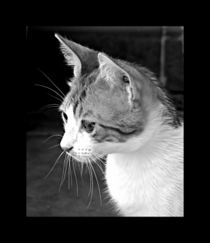 /El Gato