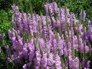 Paisagem Natural/A Cor Púrpura,