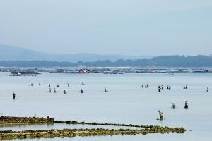 Gentes e Locais/Faina na maré baixa