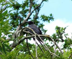 Outros/Crow - England 2006