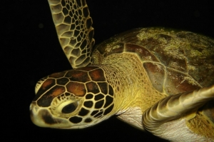 Paisagem Natural/Vida marinha