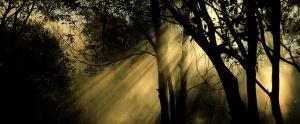/luz e sombras....