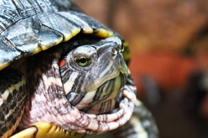 Animais/Mr. Turtle