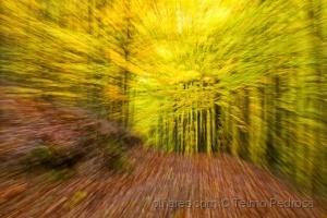 Abstrato/Alucinação na floresta de faias