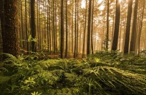 Paisagem Natural/The magic of light