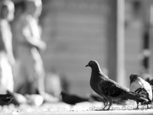 Outros/Simples como as pombas