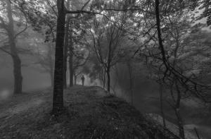 Paisagem Natural/Black forest