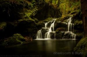 /Pura Natureza .... Açores