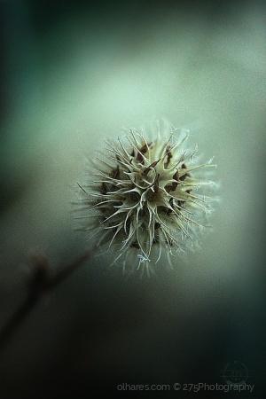 Macro/o que resta depois de tudo florir