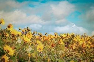 /Wild flowers