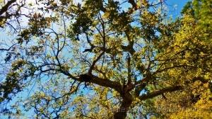 /A árvore é o corpo (ler sff) do poema
