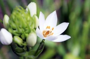 Paisagem Natural/Blossom