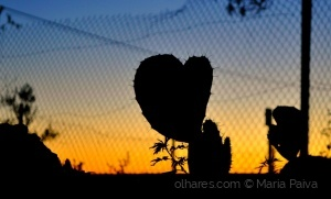 Paisagem Natural/Heart in Cactus