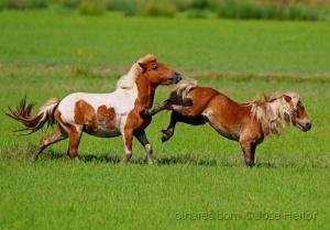 /poney s